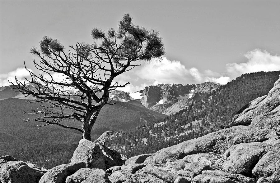 Rocky Mountain Park Colorado. Rocky Mountain Park Black And White Photography.  Trees In The Rmp Colorado. Black And White Tree Pictures.mountain Photography. Cloud Photography. Mountain Photogrtaphy.  Landscape Photography. Black And White Nature Photography. Photograph - Standing Tall by James Steele