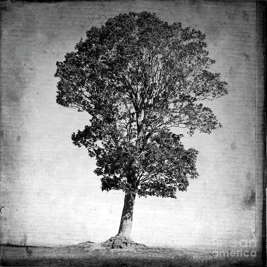 Textured Tree Photograph