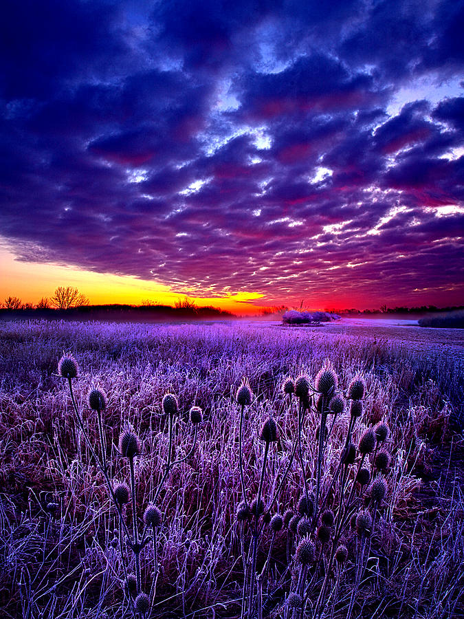 Horizons Photograph - The Audience by Phil Koch