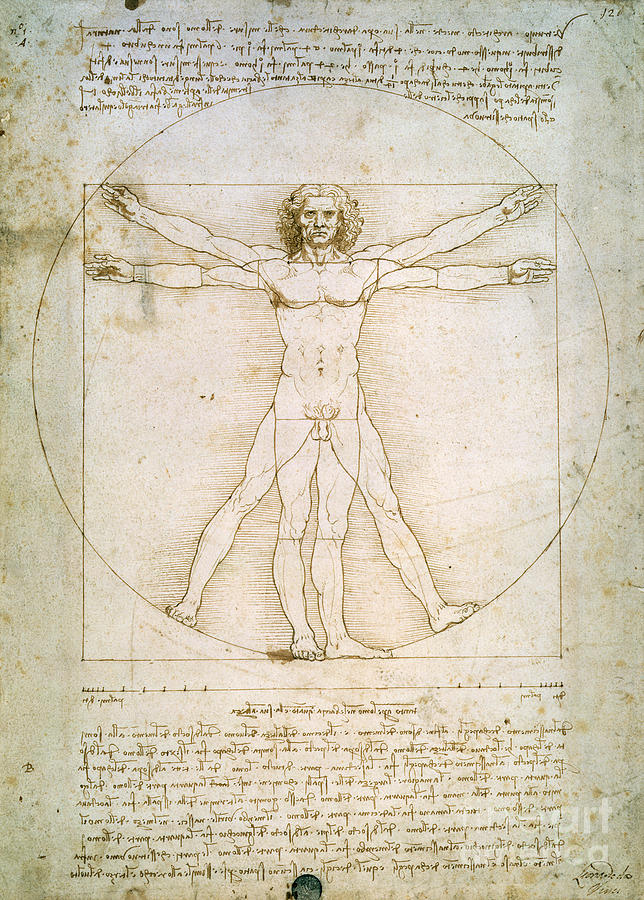 The Drawing - The Proportions Of The Human Figure by Leonardo da Vinci