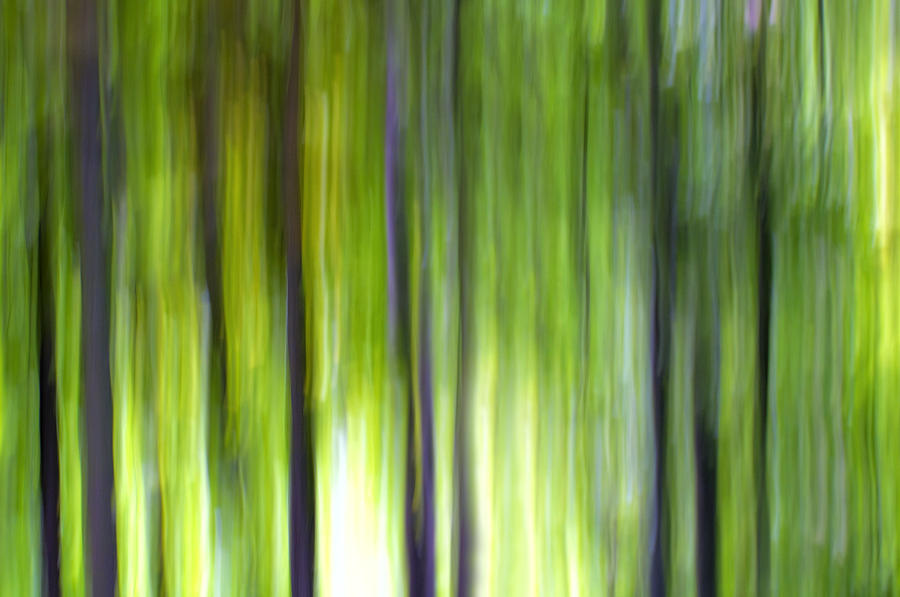 Trees Photograph - Trees by Silke Magino