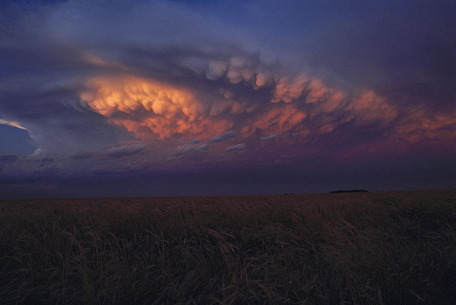 United States, Kansas,  Wheat Field Photograph