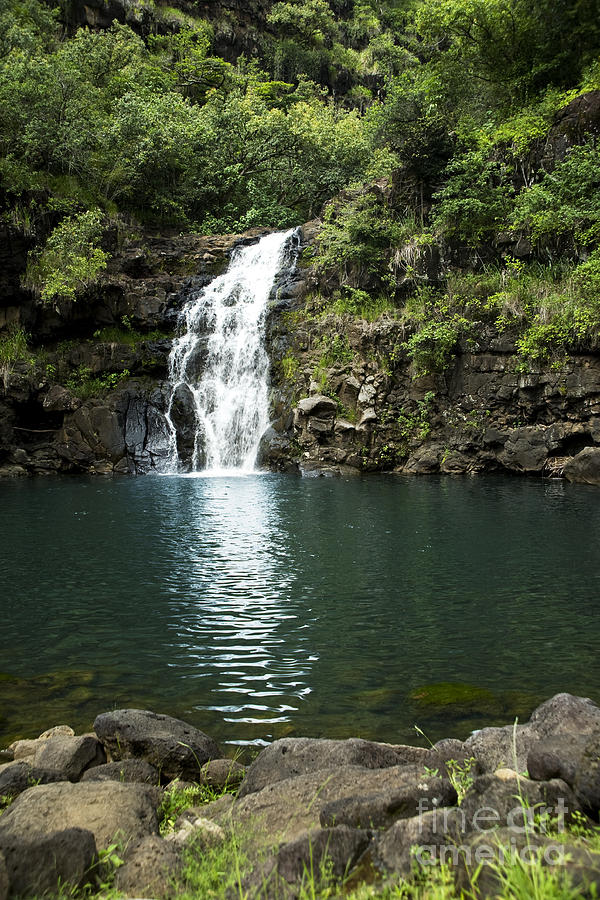 Falls Photograph - Waimea Falls by Charmian Vistaunet
