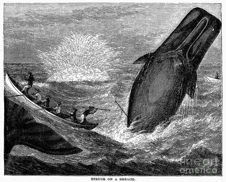 Whaling, 19th Century Photograph