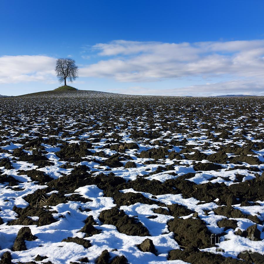 Winter Tree. Photograph
