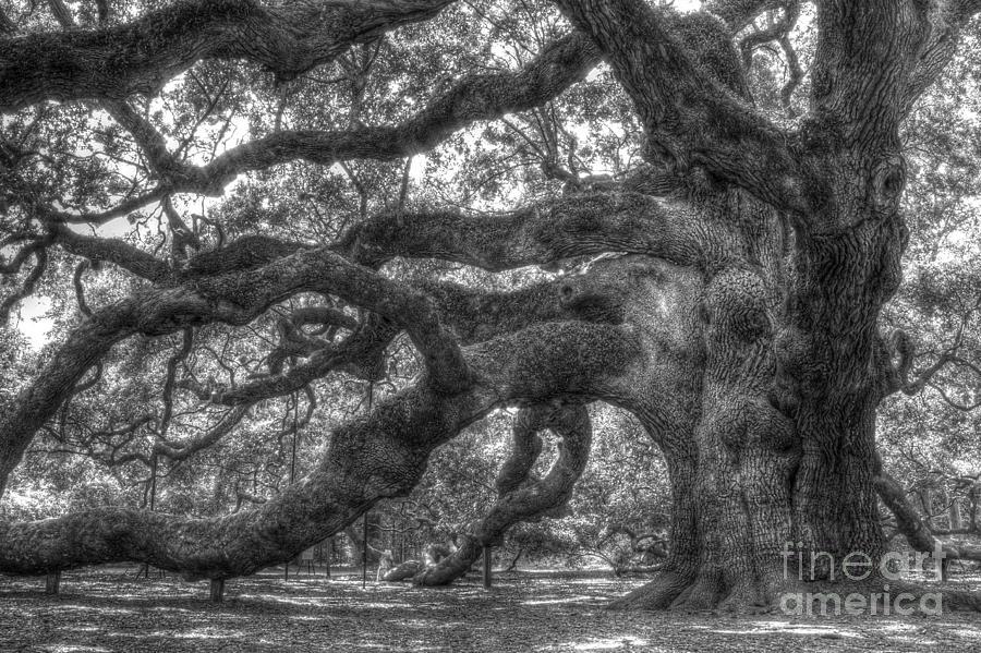 Angel Oak Photograph - Angel Oak Tree Charleston Sc by Dustin K Ryan