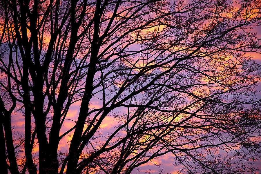 Tree Photograph - Autumn Sky by Konstantin Dikovsky