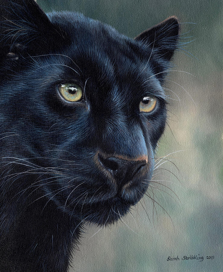Black Panther Painting By Sarah Stribbling