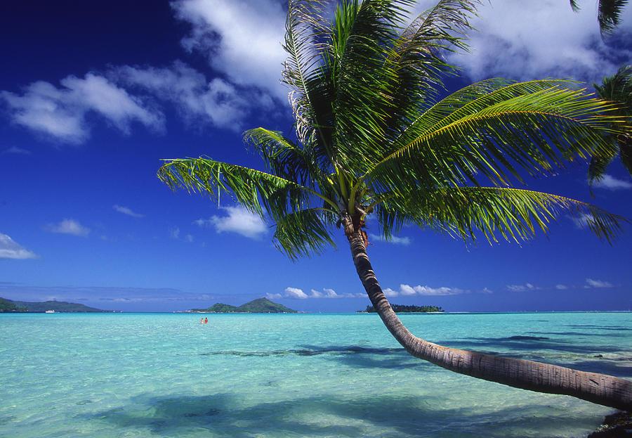 Beach Photograph - Bora Bora, Palm Tree by Ron Dahlquist - Printscapes