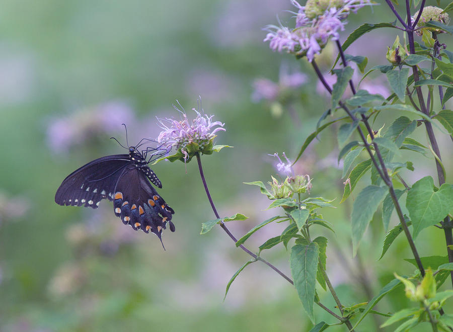 Butterfly Photograph by June Marie Sobrito