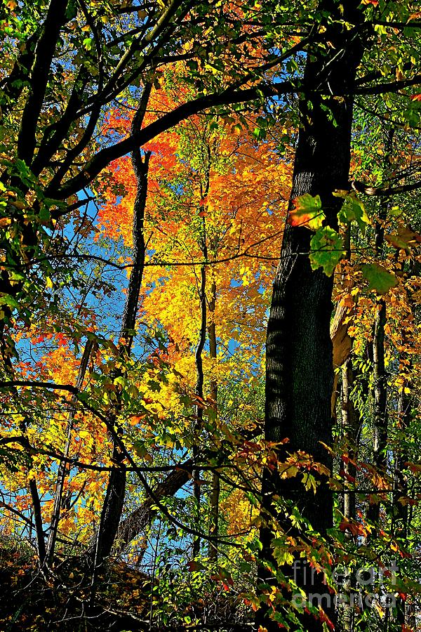 Fall Photograph - Fall Fire Works by Robert Pearson