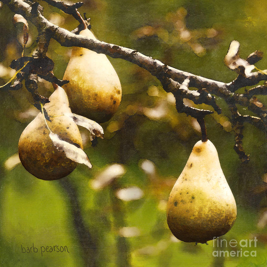 Pears Painting - Fall Harvest by Barb Pearson