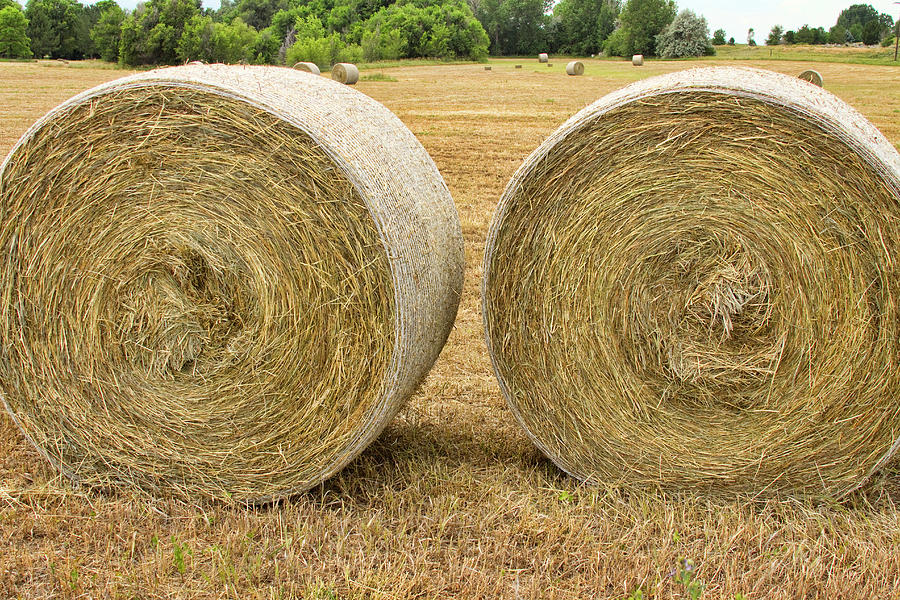 Hay Photograph - 2 Freshly Baled Round Hay Bales by James BO  Insogna