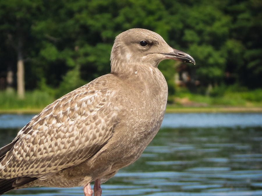 Maple Cross Birding: Durlston Country Park, Dorset