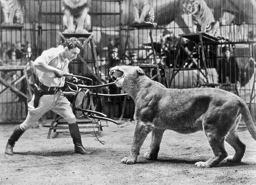 Lion Tamer 1930s Photograph By Granger