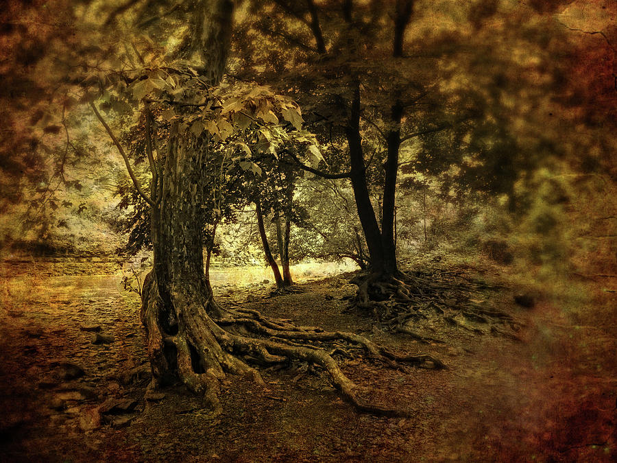 Trees Photograph - Rooted In Nature by Jessica Jenney