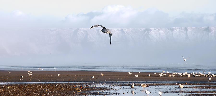 Seagull Photograph - Seagull by Svetlana Sewell