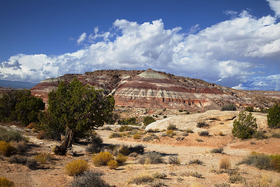 Capitol Reef National Park Photograph - Capitol Reef National Park by Mark Smith