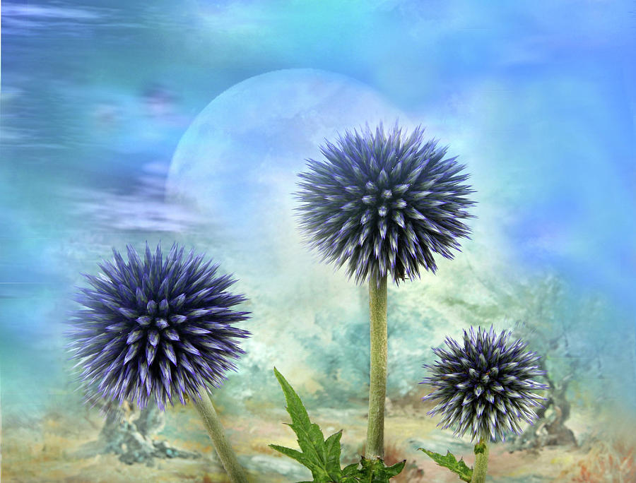 Thistle Photograph - Avantgarde by Manfred Lutzius