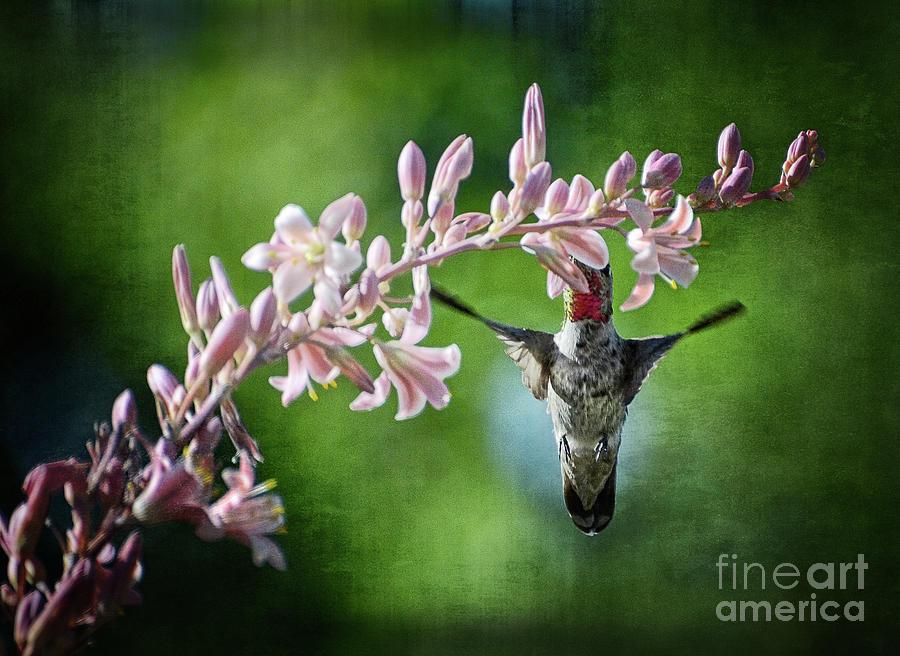 Hummingbird Photograph