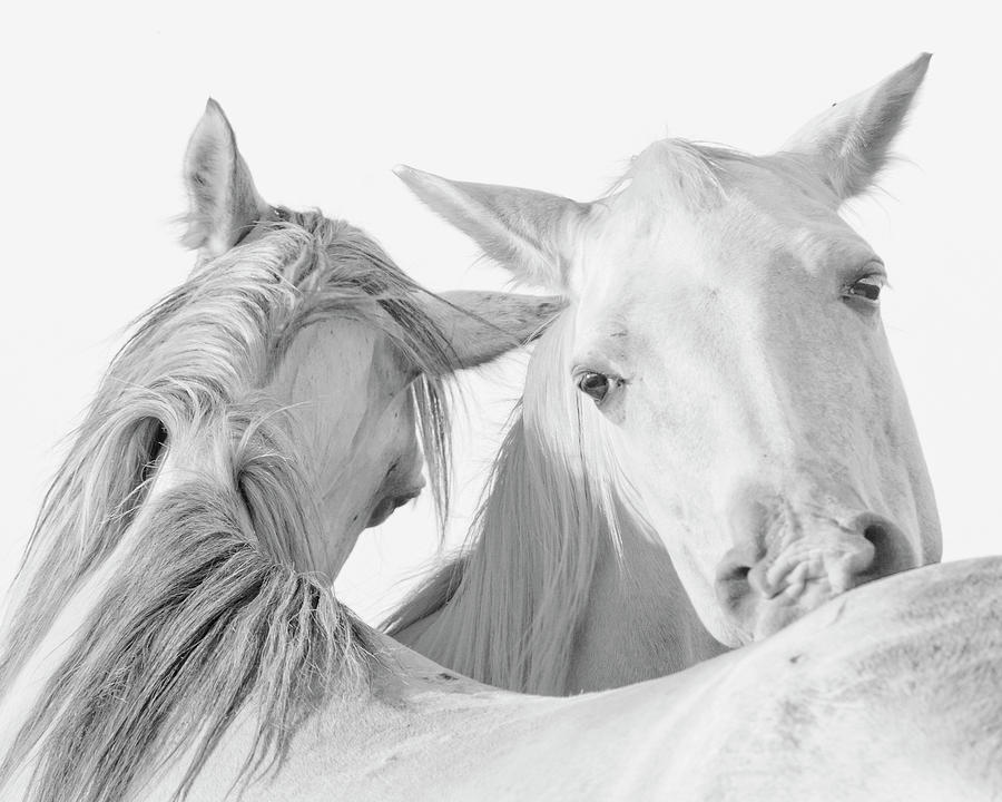 Animals Photograph - Pals by Ron  McGinnis