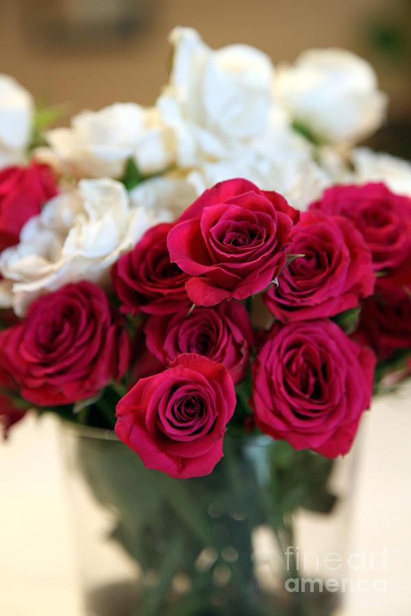 Rose Photograph - Roses by Amanda Barcon