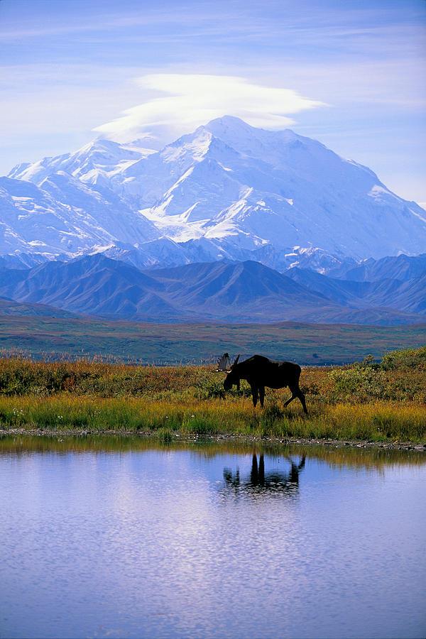 Denali National Park Photograph