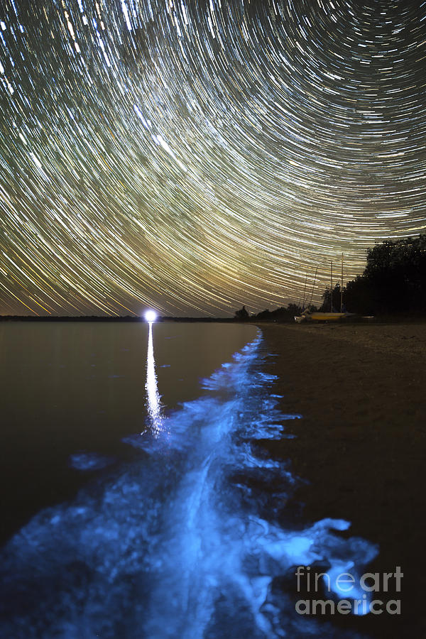 Star Trails And Bioluminescence Photograph