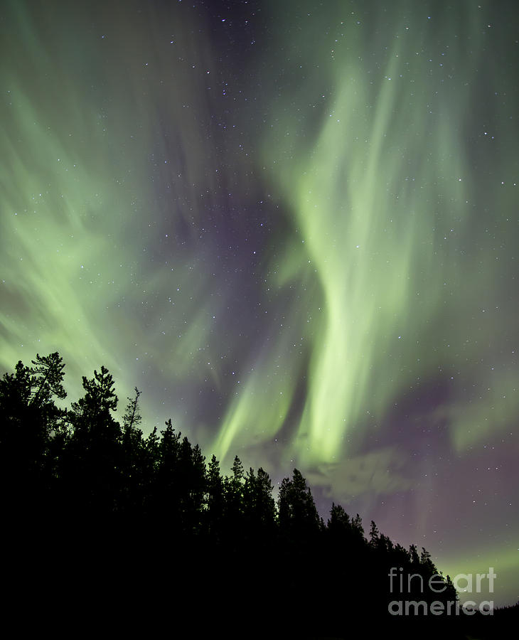 Vertical Photograph - Aurora Borealis Over Trees, Yukon by Jonathan Tucker