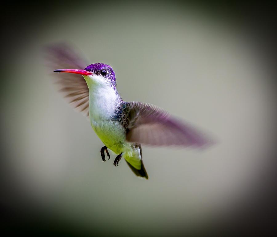 Hummingbird Wood Crafts