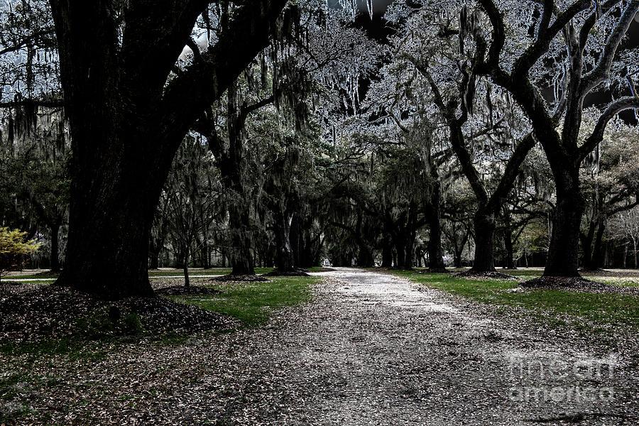 Halloween Path Photograph