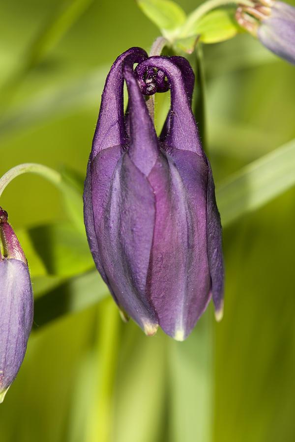 Flower Photograph - Purple Flower by Jouko Mikkola