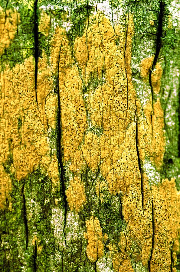 Vertical Photograph - Tree Bark by John Foxx