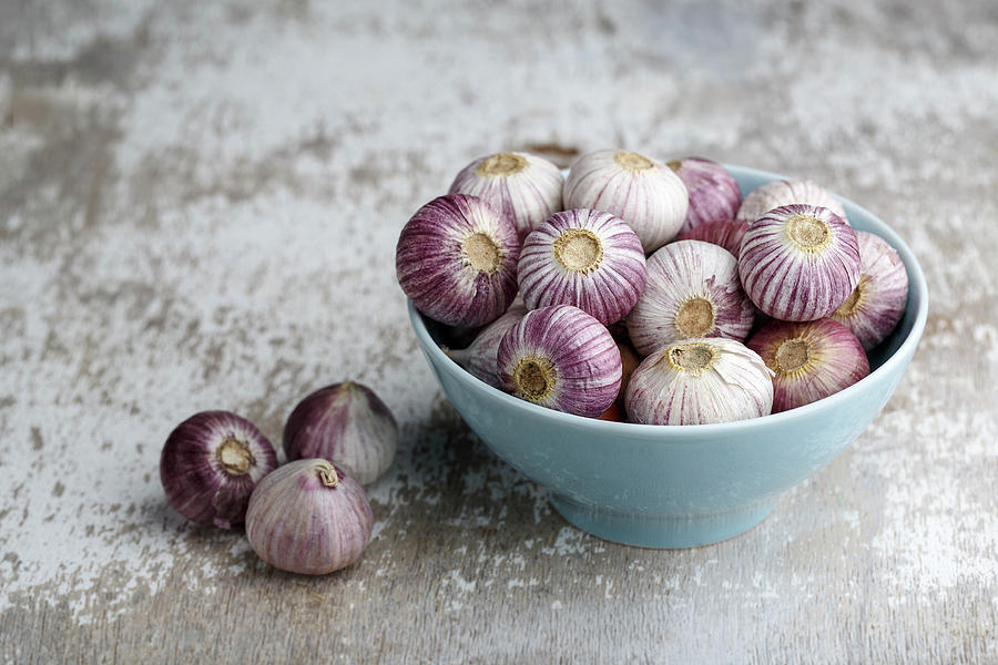 Garlic Photograph