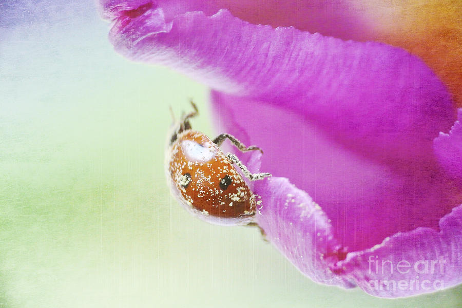 Bug Photograph - A Breath Of Spring by Angela Doelling AD DESIGN Photo and PhotoArt