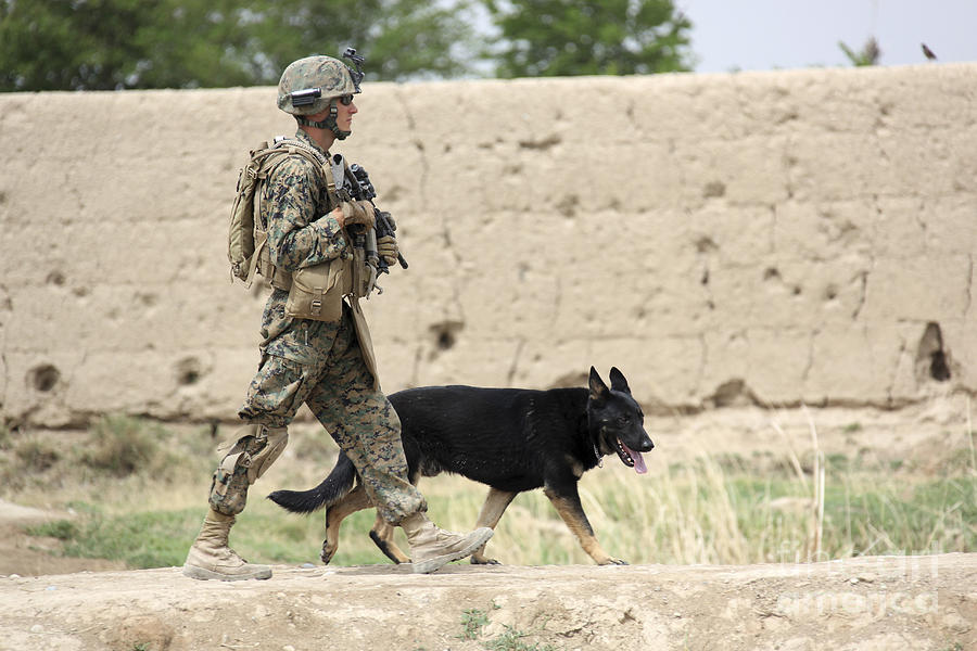 Friendship Photograph - A Dog Handler Of The U.s. Marine Corps by Stocktrek Images