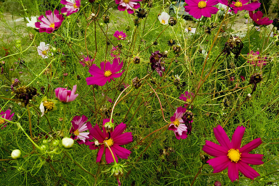 A Field Of Wild Flowers Growing Photograph
