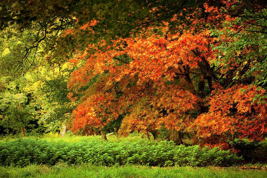 A Flourish Of Colour Photograph