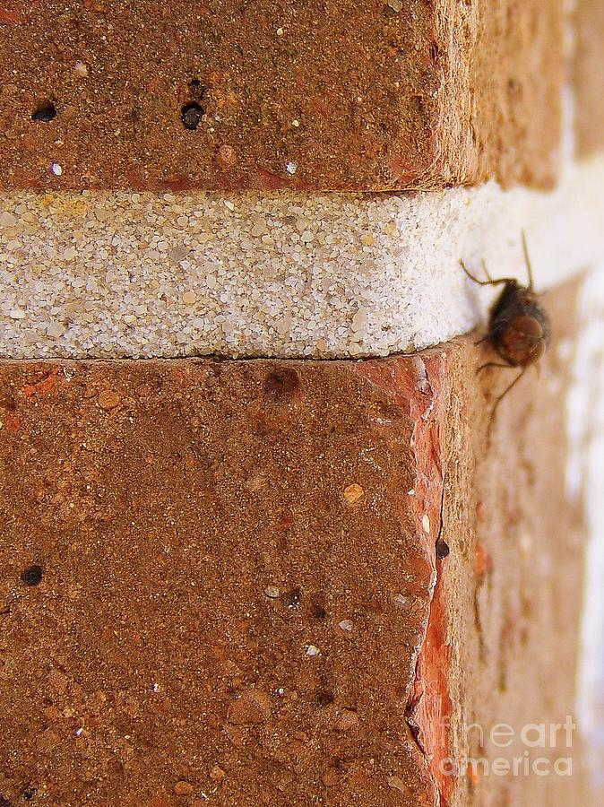 A Fly On The Wall Photograph