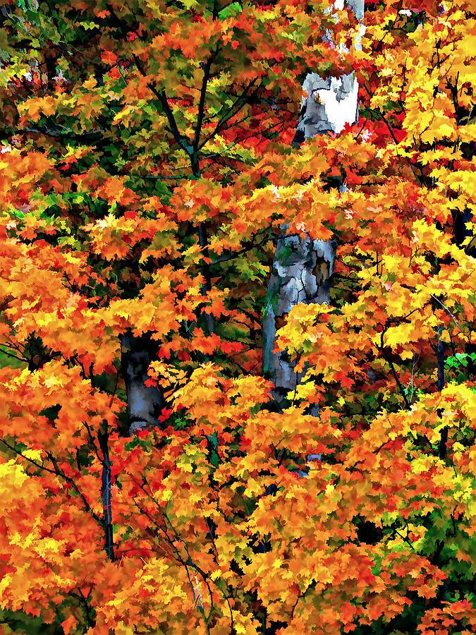 Trees Photograph - A Giant Passes by Steve Harrington