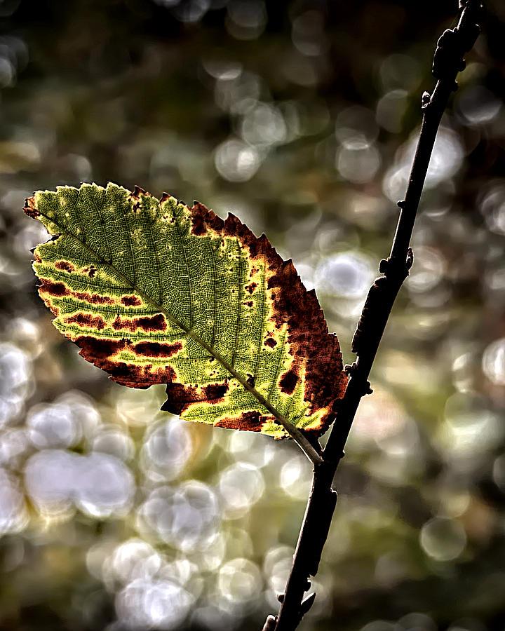 A Leaf Photograph