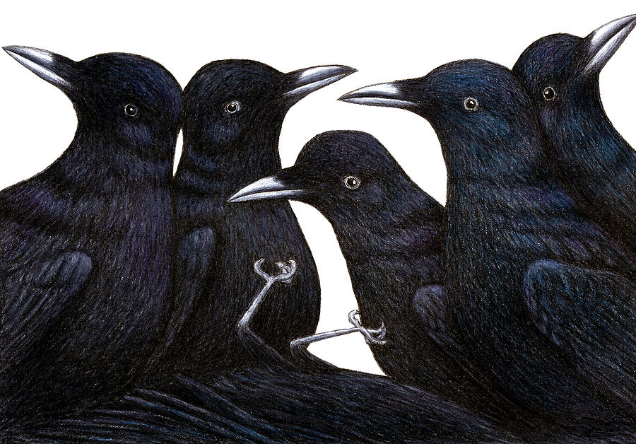 Crows Drawing - A Murder Of Crows by Don McMahon