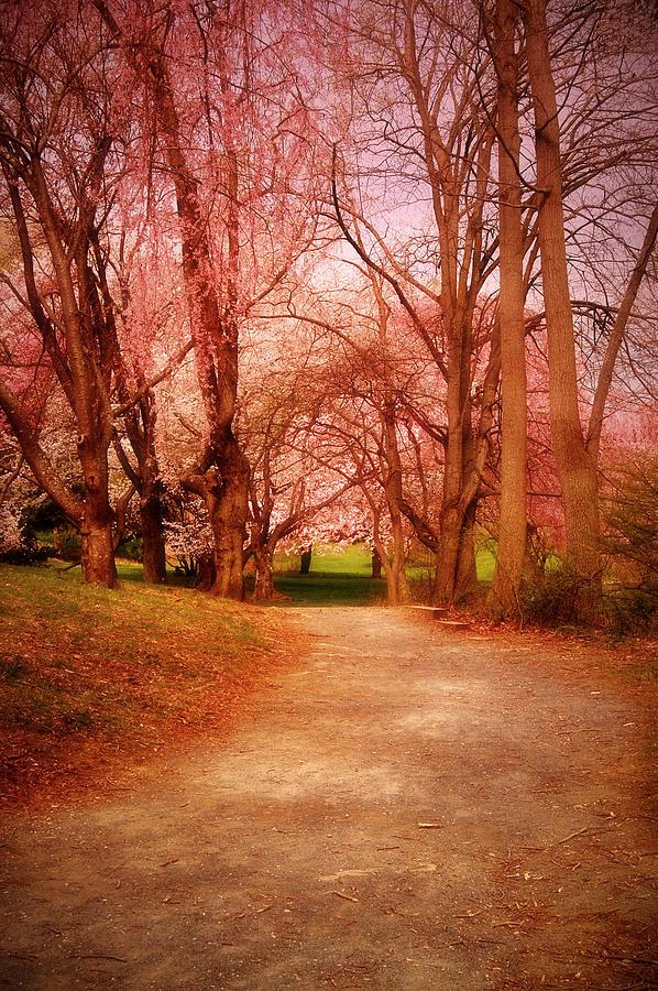 Cherry Blossom Trees Photograph - A Path To Fantasy - Holmdel Park by Angie Tirado