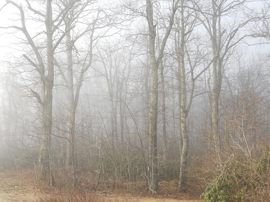 A Perfectly Beautiful Foggy Morning Photograph