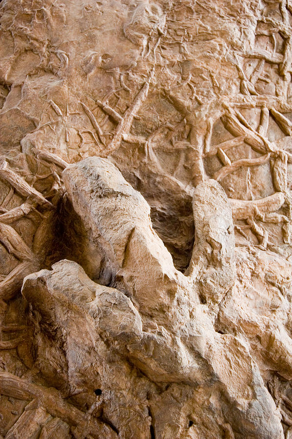 A Petrified Dinosaur Footprint Shown Photograph