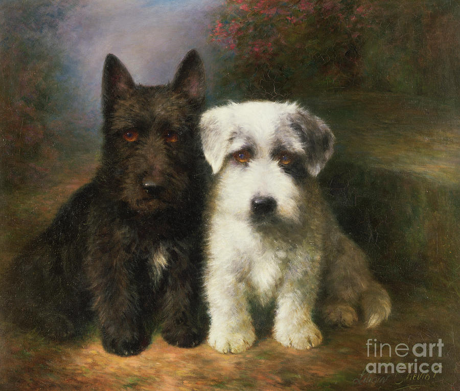 Dogs Painting - A Scottish And A Sealyham Terrier by Lilian Cheviot
