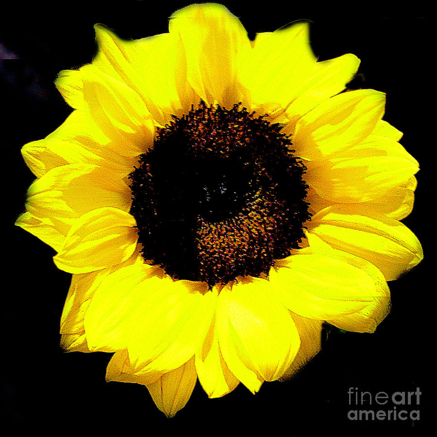 single women in sunflower Sunflower mom 388 likes at sunflowermom, i write for single moms intentionally connecting with their kids single moms face issues that other parents.