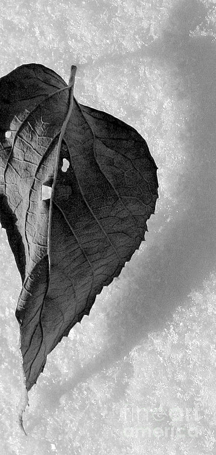 Nature Photographs Photograph - A Tattered Heart by Julie Lueders