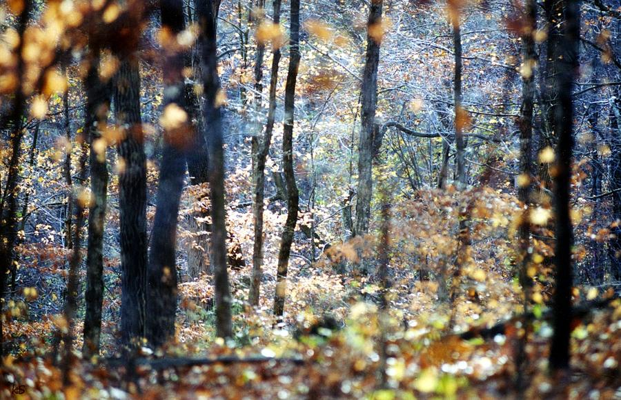 Montgomery Bell State Park Photograph - A Walk In Fall by Kay Sawyer