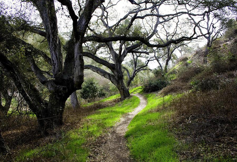 Live Oak Trees Photograph - A Walk In The Woods by Joe Darin